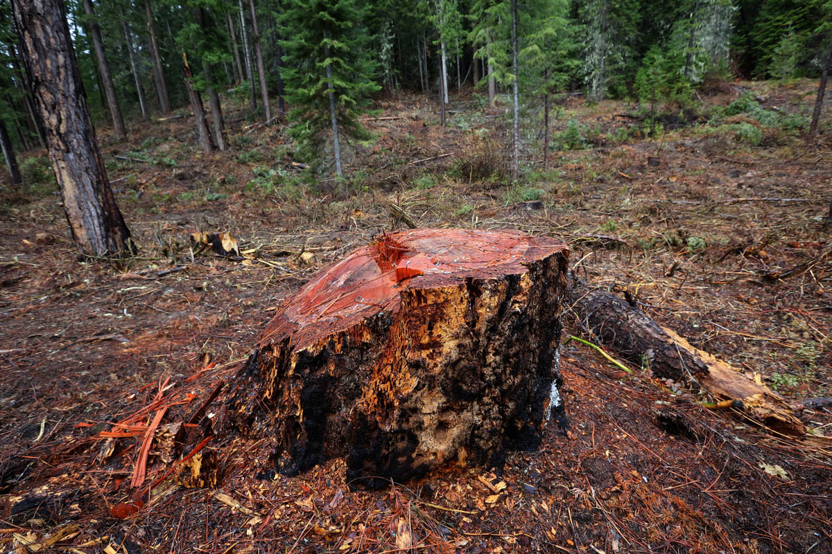 Rushing to stop a fire that never came, Forest Service logged miles